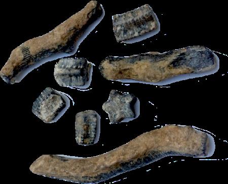 Crinoid Stem