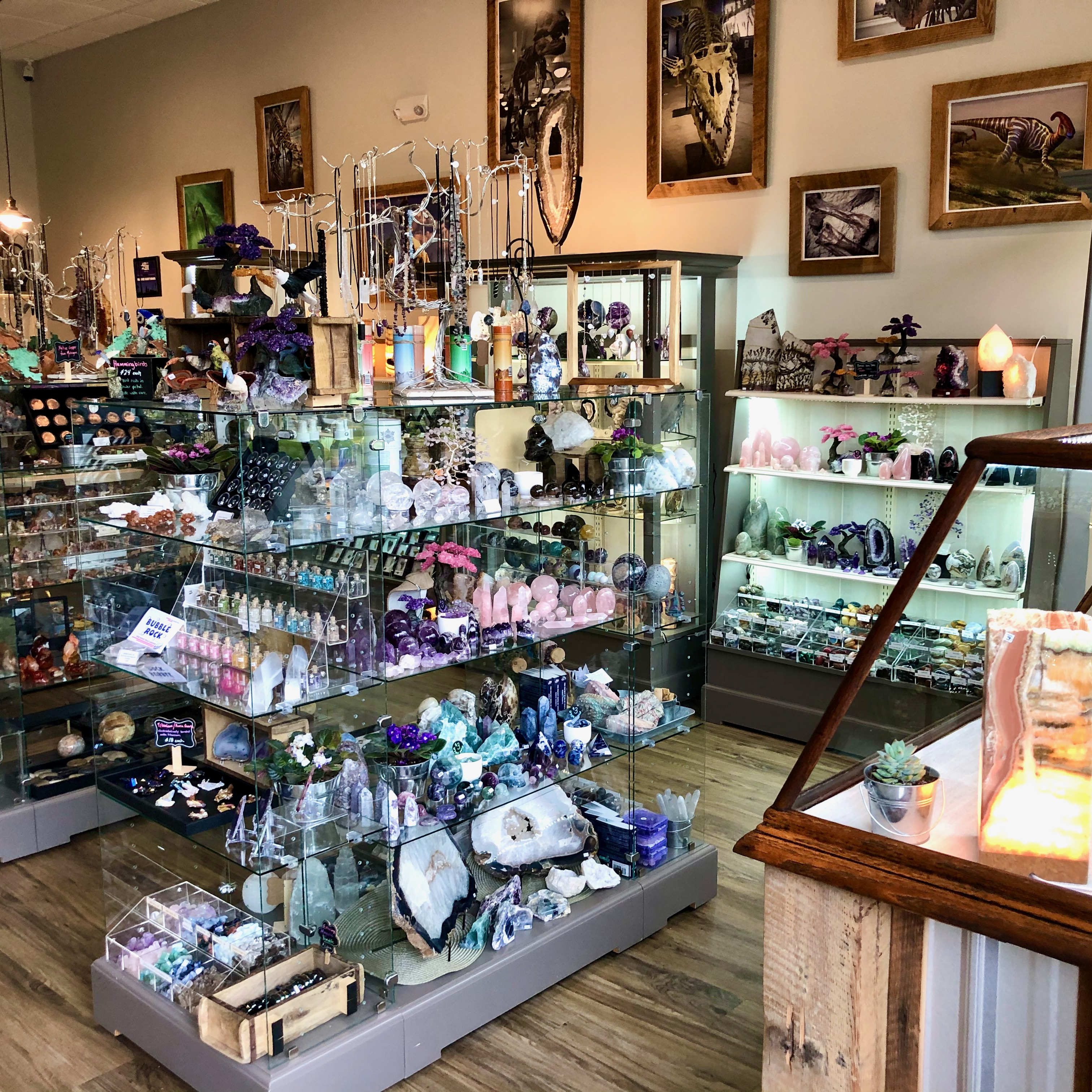 Crystal and Fossil Gift Shop